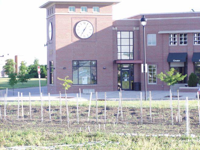 A community garden in Somerset, Ames Iowa?