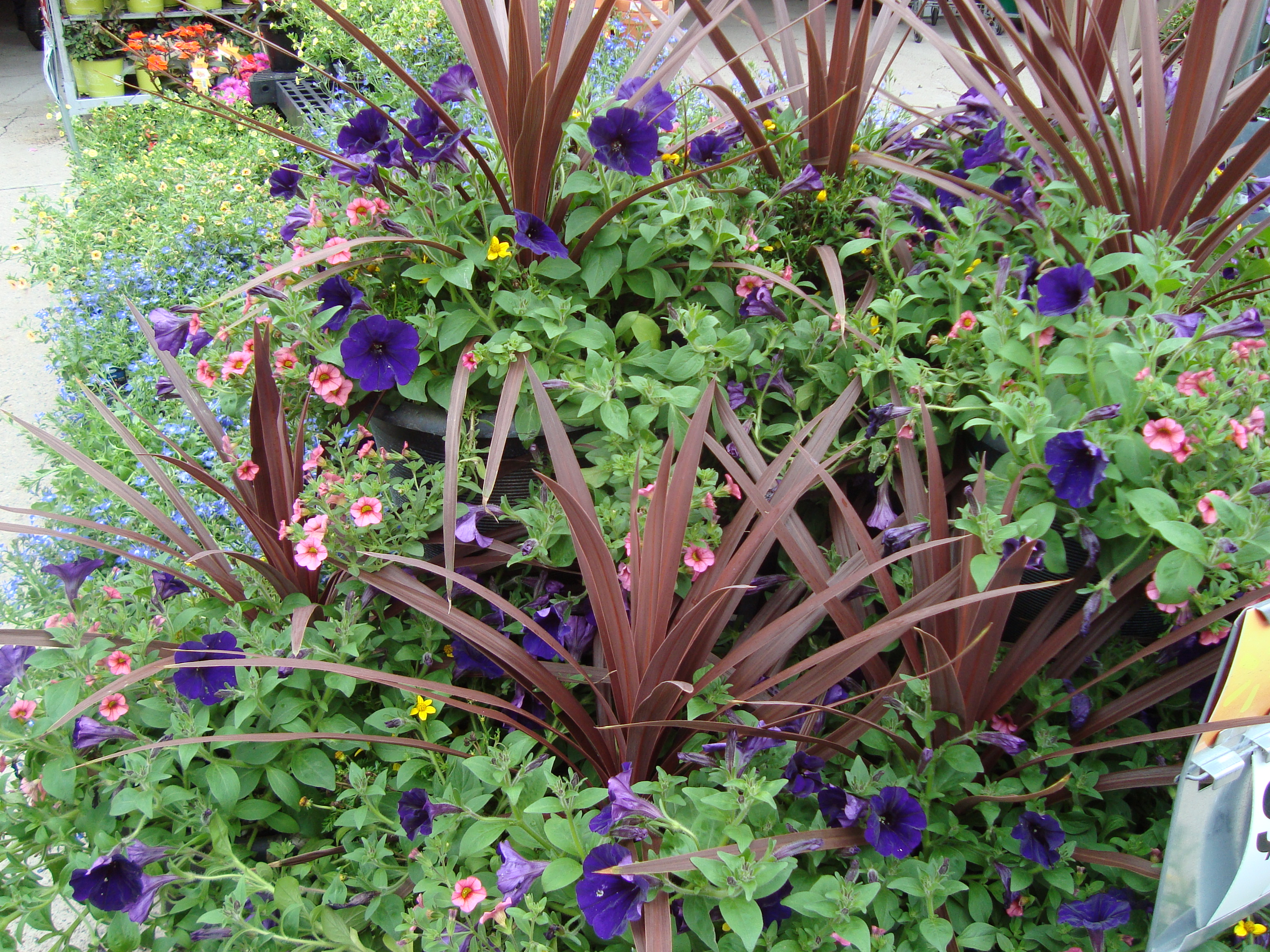 Brown and purple flower combination a passion for green - Brown and violet combination ...
