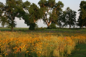Iowa meadow